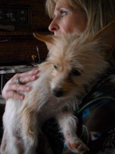 Creature Concierge - Dallas Pet Specialists-11