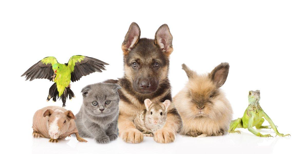 Creature Concierge - Dallas Pet Specialists