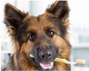 Creature Concierge Dallas Affordable Dallas Pet Dental Services