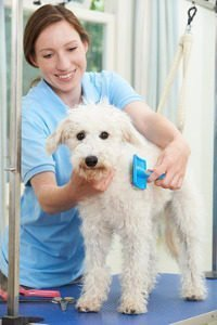 Creature Concierge Dog Grooming Drop Off and Pick Up