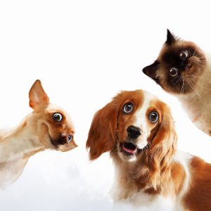 Creature Concierge DFW - Choosing Pets Wisely