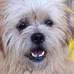 Creature Concierge Dallas - Pet Dental Disease Solutions