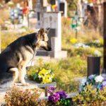 Creature Concierge Dallas - Legacy Planning for Pets