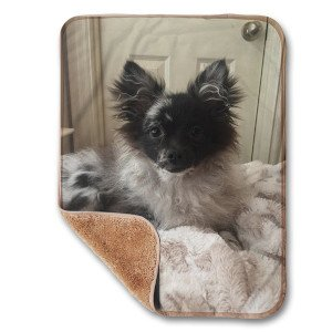 Creature Concierge - Pet Personalized Small Sherpa Blanket