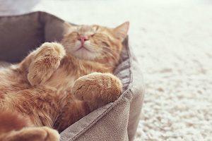 Creature Concierge Dallas Pet Sitting - Cats Like Familiar Surroundings