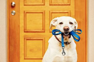 Creature Concierge Dallas Pet Sitting - Pet Routines Can Be Maintained