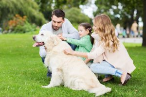 Creature Concierge Dallas - Pets Have Therapeutic Value