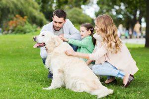 Creature Concierge Dallas - Pets Have Therapeutic Value